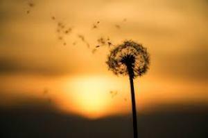 Güneş Tutulması Haftası Burç Yorumları