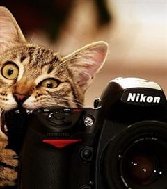 En İyi Fotoğraf Uygulamaları