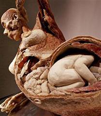 Ceset sergisi: Body Worlds geliyor!