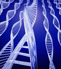 Kalp krizine yol açan 13 gen