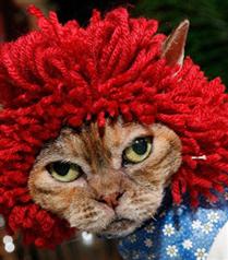 Kedi Moda Şovu