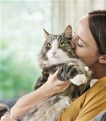 Kedi Tüyünde Bulunan Alerjenleri Azaltan Güçlü Etki: Purina Pro Plan LiveClear
