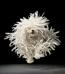 Köpek fotoğrafçısı Tim Flach`ın objektifinden