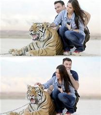 Megan Fox kaplanlarla sarmaş dolaş