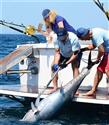 MOST Bodrum Sportif Balık Avı Turnuvası İçin Geri Sayım Başladı
