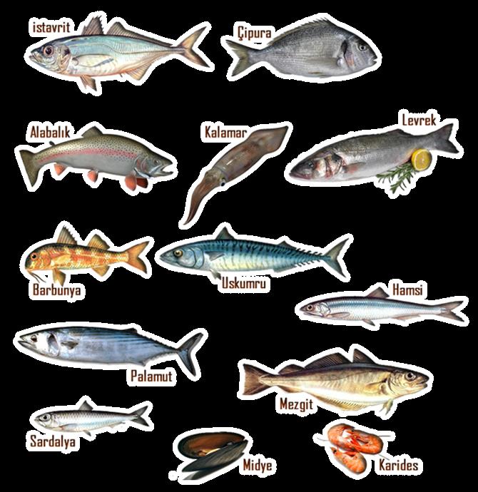 Balık Tüketirken Bunlara Dikkat Edin