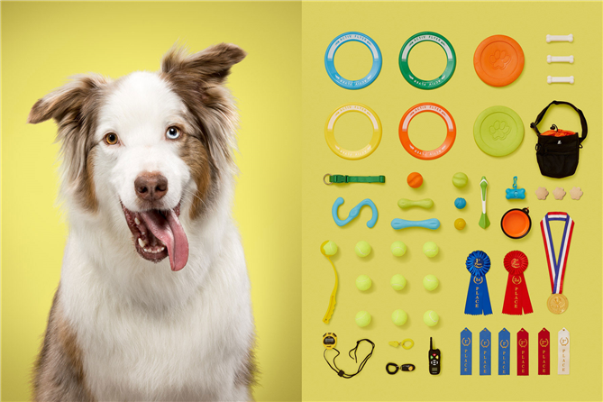 Fotoğraflarla Bir Köpeğin Çantası