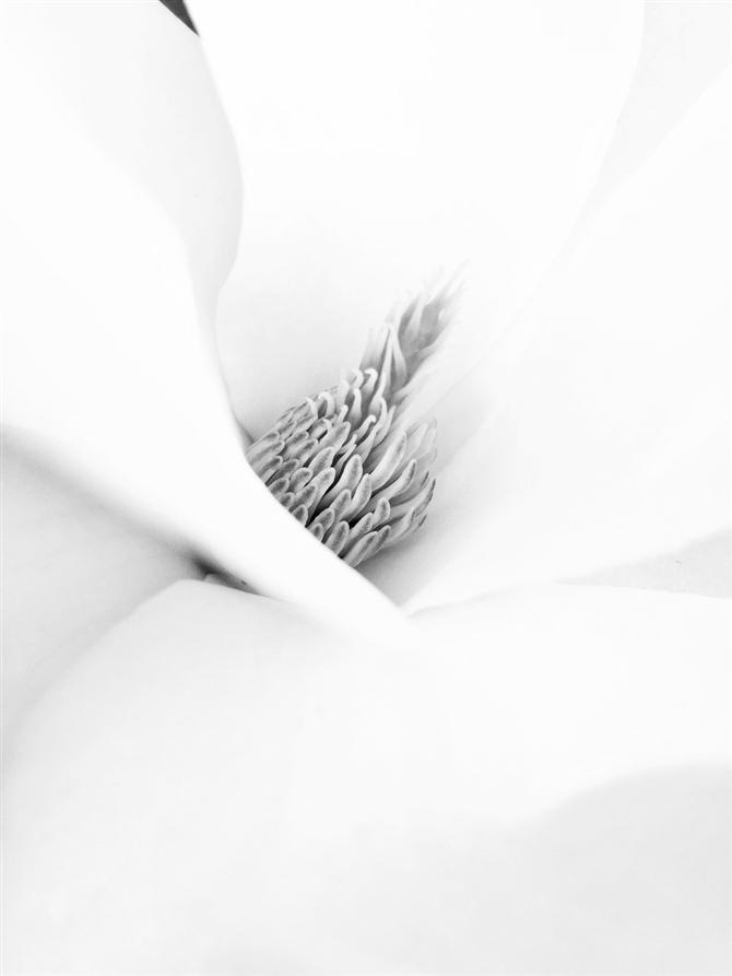 iPhone Fotoğraf Ödüllü Harika Kareler