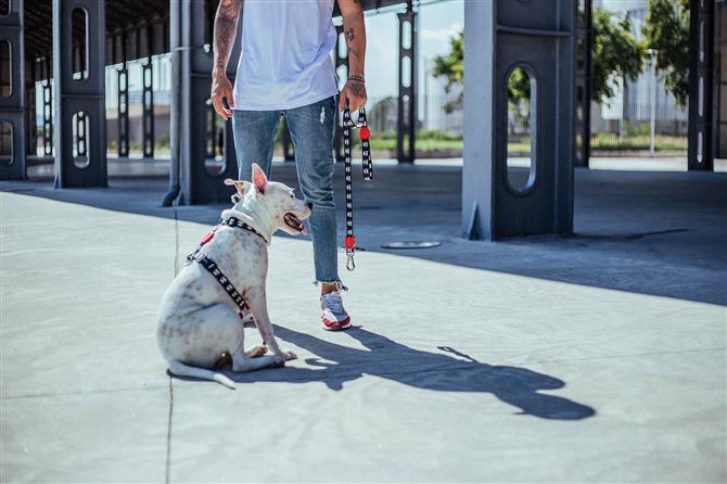 Kedi ve Köpek Dostlarınız İçin Keyifli Aksesuarlar PopDog'da