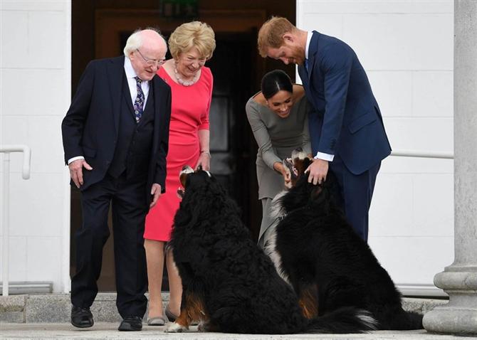 Meghan Markle ve Prens Harry'nin Köpeği