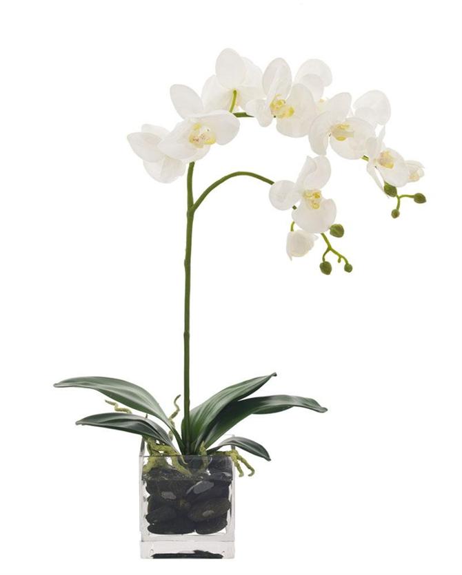 Orkide Bakımı