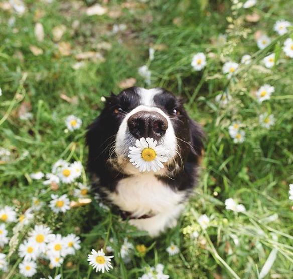 Sevimli Momo Gününüze Neşe Katacak