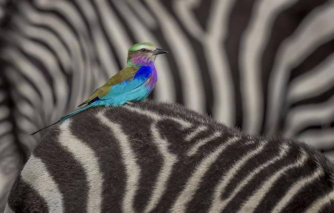 Yılın Vahşi Yaşam Fotoğrafları Belli Oldu - Yılın Vahşi Yaşam Fotoğrafları Belli Oldu
