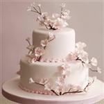 En Güzel Söz&Nişan Pastaları