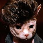 kedi-kostumleri