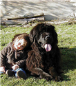 Çocuk dostu köpekler