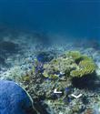 Google Maps okyanus altında