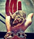 Justin Bieber ve hamsterı Pac